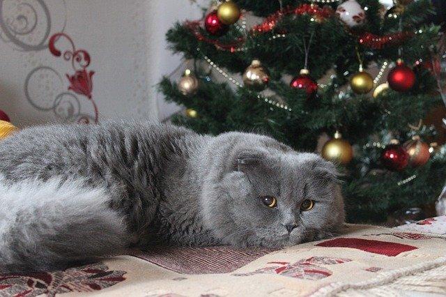 cuidados de tu gato con el árbol de navidad