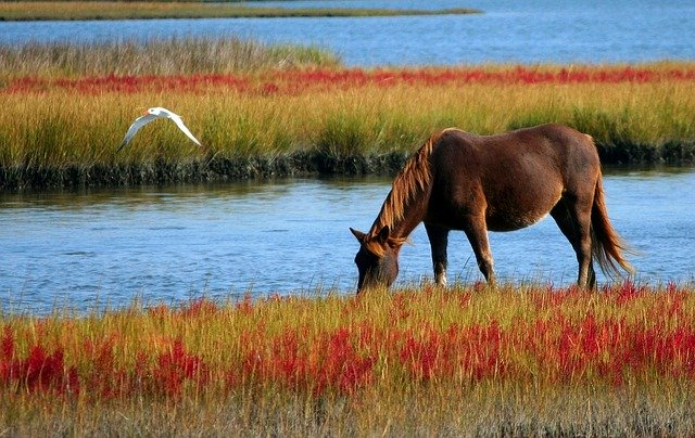 curiosidades de los caballos beben mucho