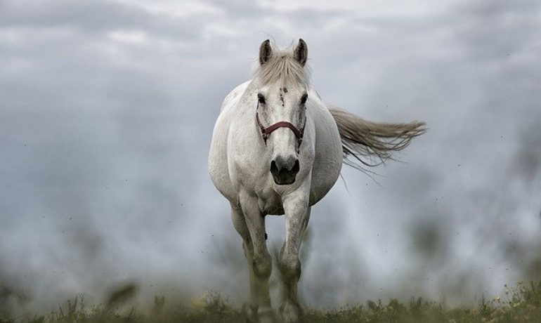 curiosidades de los caballos que no conocías