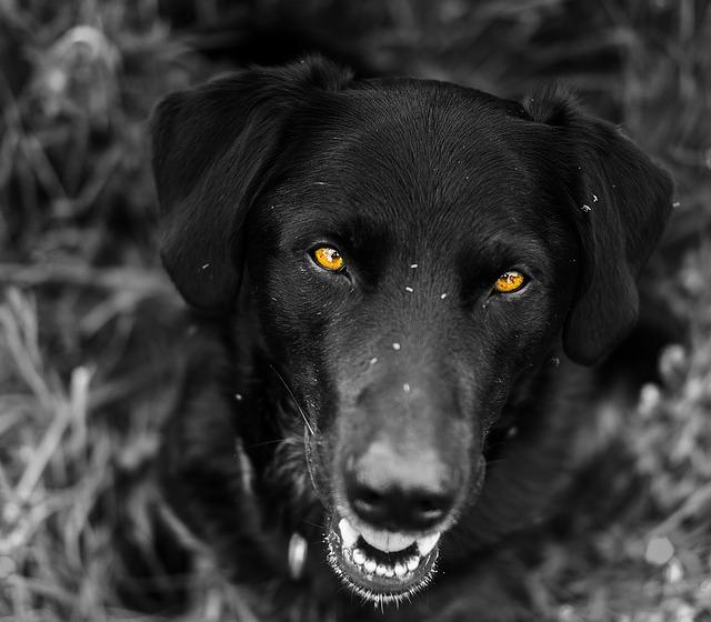 evitar que los perros ataquen