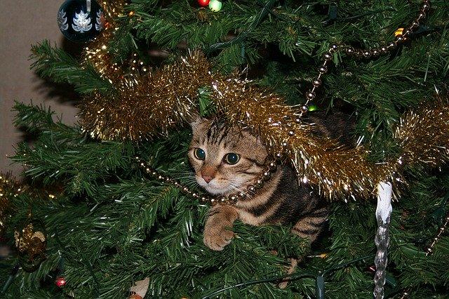 gatos y árbol de navidad