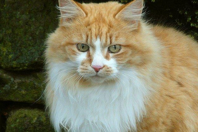 hemorragia nasal en gatos mi gato sangra por la nariz