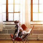 la calefacción afecta a las mascotas