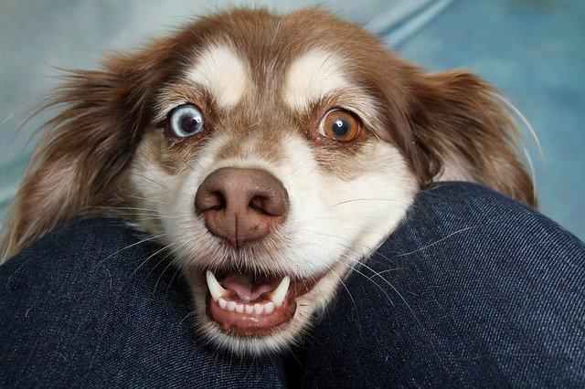 la importancia de los cuidados de los ojos de tu mascota