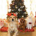 las mascotas en navidad son uno mas