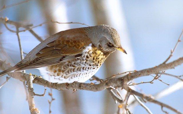 los cuidados de los pájaros en invierno más importantes