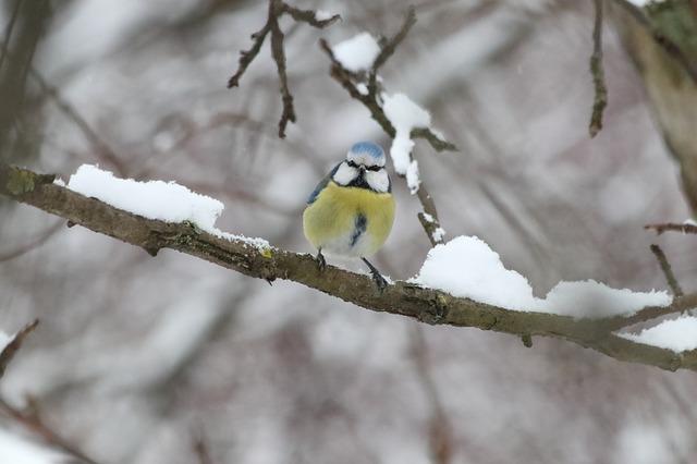 los cuidados de los pájaros en invierno