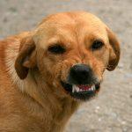 por qué atacan los perros