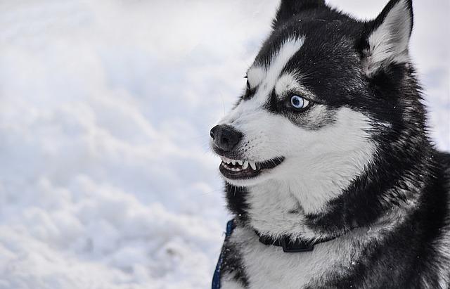por qué atacan los perros motivos