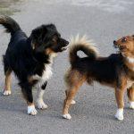 por qué los perros se huelen el trasero