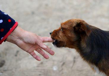 qué hacer cuando te muerde un perro