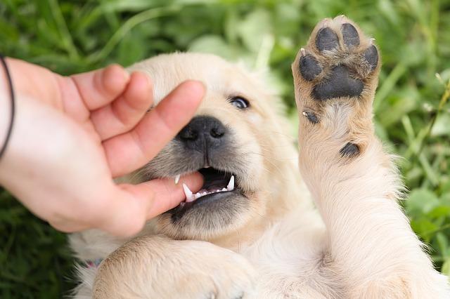 qué hacer cuando te muerde un perro el cuerpo