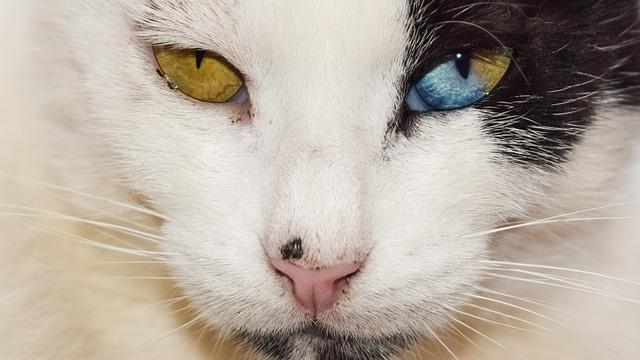 qué hago si el gato sangra por la nariz