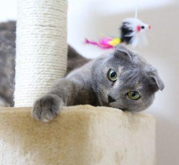 razas de gatos extrañas