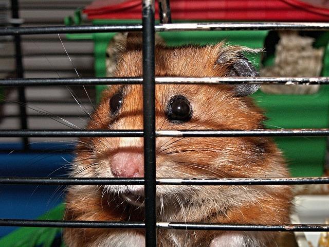 tamaño de la jaula del hámster