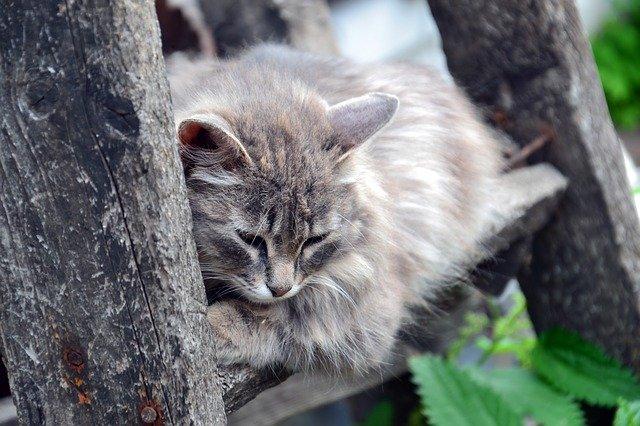 cómo puedes ayudar a un gato triste