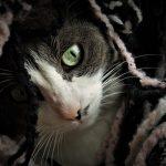 cómo ayudar a un gato triste