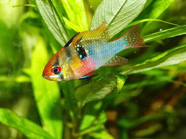 cómo evito que un pez caiga enfermo