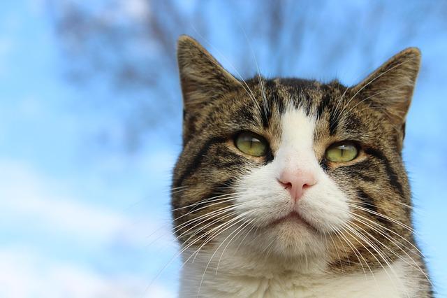 consejos para evitar que tu gato esterilizado engorde