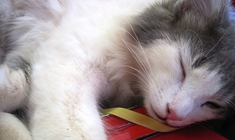 las vacunas de los gatos más importantes para su salud