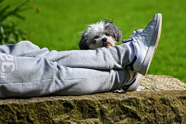 lo que puedo hacer si tengo alergia a mi perro