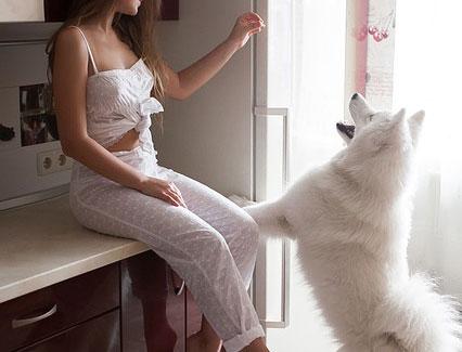 motivos para que tu perro no entre en la cocina