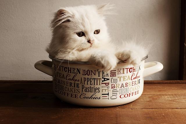 no debes permitir que tu mascota entre en la cocina