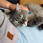 por qué amasan los gatos