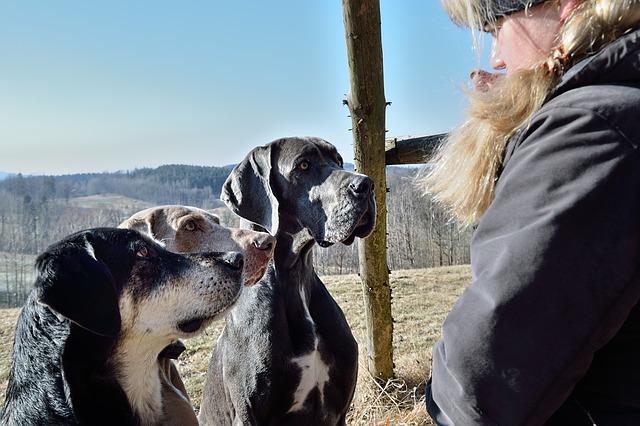 qué hacer ante un perro dominante
