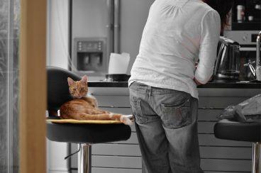 razones para mantener a tu mascota alejada de la cocina