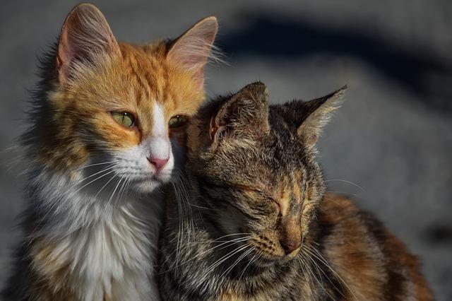 síntomas de tristeza en gatos