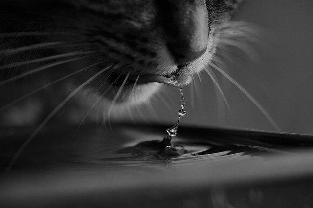tips para que tu gato beba agua