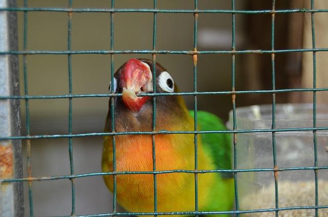 adoptar pájaros como mascotas