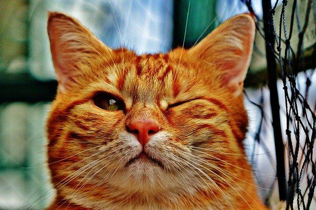 cambios de comportamiento de los gatos con rabia