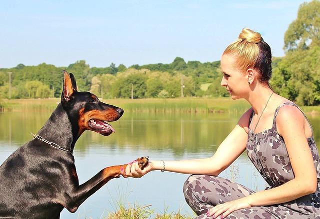 Capacidad de superación lo que nos enseñan los perros