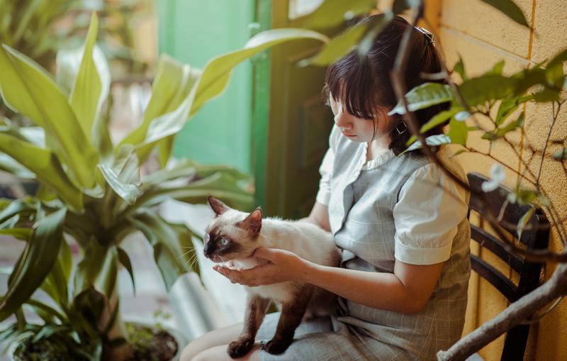 cómo sería el mundo sin gatos
