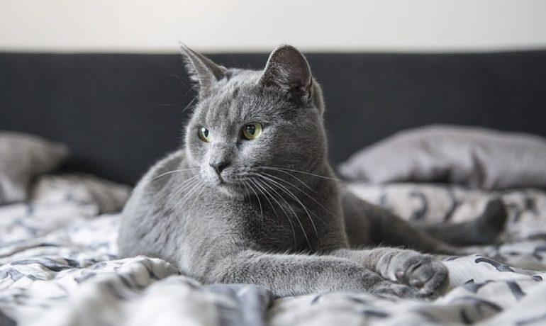 cómo son los sentidos de los gatos