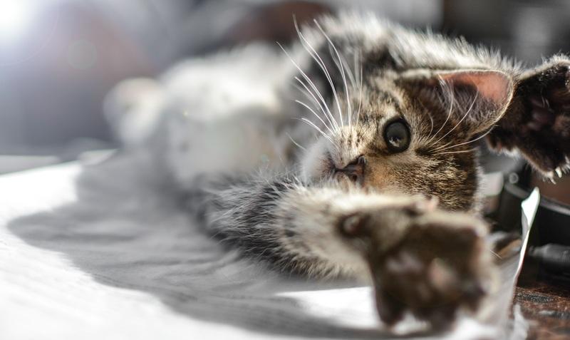 consecuencias si los gatos desaparecieran