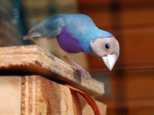 consejos para adoptar pájaros como mascotas