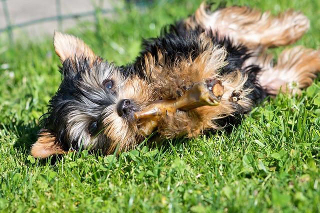 consejos si tu perro come alimentos crudos