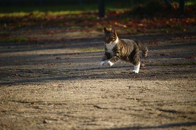 el sexto sentido de los gatos