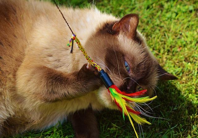 en un gato anciano suelen aparecer enfermedades