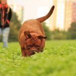 errores al desparasitar a las mascotas