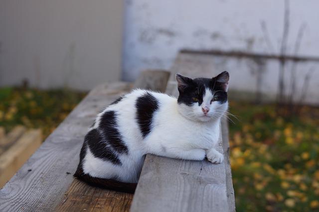 la vejez en gatos cuando un gato es anciano