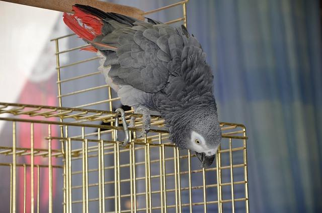 lo que debes considerar si vas a adoptar pájaros como mascotas