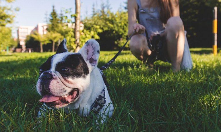 Lo que nos enseñan los perros