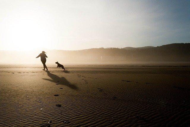Lo que nos enseñan los perros cada día