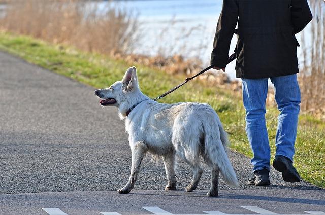 Lo que nos enseñan los perros es que debemos hacer ejercicio