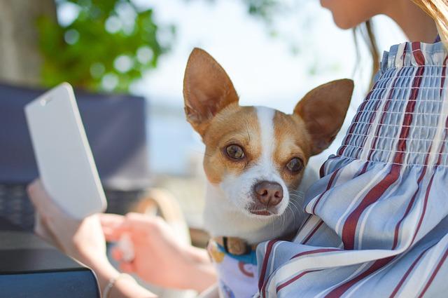 los perros saben escuchar