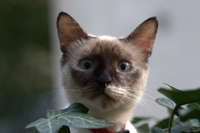 los sentidos de los gatos el olfato